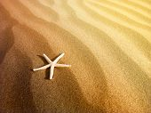 Starfish on a sand beach
