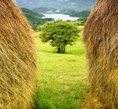 Big haystacks on the meadow