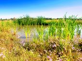 Wetlands - Marsh