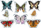 illustration with eight different butterflies isolated on white background