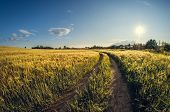 Landscape Dirt Road In A Sowing Field At Sunset poster