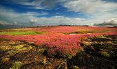 Beautiful Landscape of the flower field