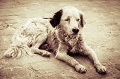 stock photo of stray dog  - Homeless and hungry dog abandoned on the streets - JPG