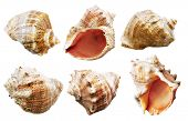 shell mollusks set isolated on white background