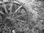 Wagon Wheel In Weeds