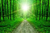 nature. pathway in the forest with sunlight