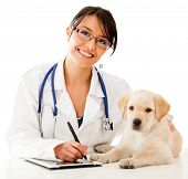 stock photo of vet  - Vet using technology with a little dog  - JPG