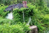 Overgrown Water Pump House