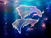 picture of pisces  - Fairy tale begins where life began - JPG