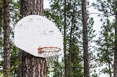 Pine Tree Basketball Hoop And Backboard 1
