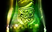 stock photo of excretory  - Digital illustration of a human digestive system and Skelton - JPG