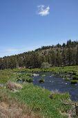 Conifer Forest Along The Deschutes River  In The High Desert Of Central Oregon, Near Redmond..