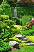 pic of juniper-tree  - Beautiful manicured Japanese garden with mature Japanese Maple trees and Junipers with a cascading waterfall in the background - JPG