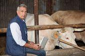 Fazendeiro ficou no gabinete de gado