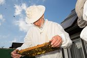 Beekeeper Caring For Bee Colony