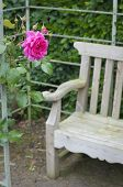 Red Rose And Garden Bench