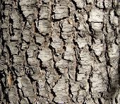 Wood Bark poster