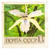 Stamp Printed In Ussr (russia) Shows White Orchid With The Inscription