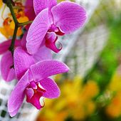 pink orchids composition