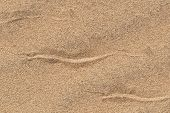 Sidewinding Snake Tracks Across The Sand
