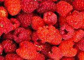 Rasberry Background
