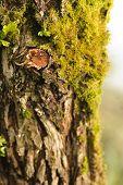 Close-up Bark