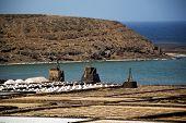 Coastline Salt In  Lanzarote  Musk