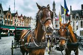 Horse-drawn Carriages In Bruges, Belgium