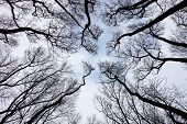Silhouettes Of Bare Trees