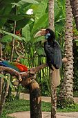 Wreathed Hornbill On The Branch In Rainforest