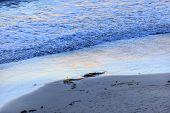 Eilwood Mesa Beach Seaweed Pacific Ocean Evening Goleta California