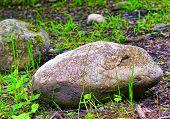 Big Stone In Green Grass