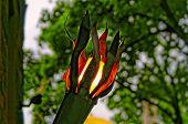 Torch-like Garden Lantern