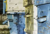 Swarm Of Bees Fly To Beehive