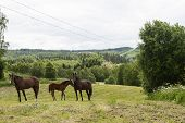 Horses In A Slope