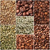 Collage of different coffee beans