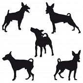 Five Miniature Pinscher black silhouettes