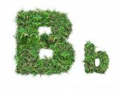 Letter B On Green Grass Isolated