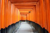 stock photo of inari  - Fushimi Inari Taisha Shrine torii gates in Kyoto - JPG