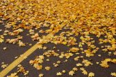 Yellow leaves on parking lot