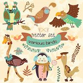 Vector Set Of With Cute Various Birds.penguin, Ostrich, Eagle, Owl, Duck, Quail, Bird .