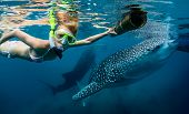 Underwater shot of the young lady snorkeling with whale sharks