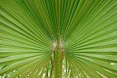Palm Tree Leaf Closeup