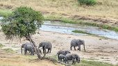 Herd Of Elephants, Tarangire National Park, Manyara, Tanzania, Africa