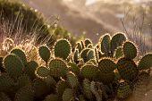Cactus in morning light