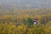 Red and white cabin in the mountain forest, Betula pubescens.