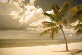 Miami Beach Florida palm trees by the ocean