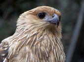 close up of a Kite