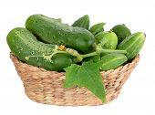 Organice Cucumbers