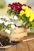 Rustic table with flowers, pots, potting soil, watering can and plants on bright background. Planting flowers concept